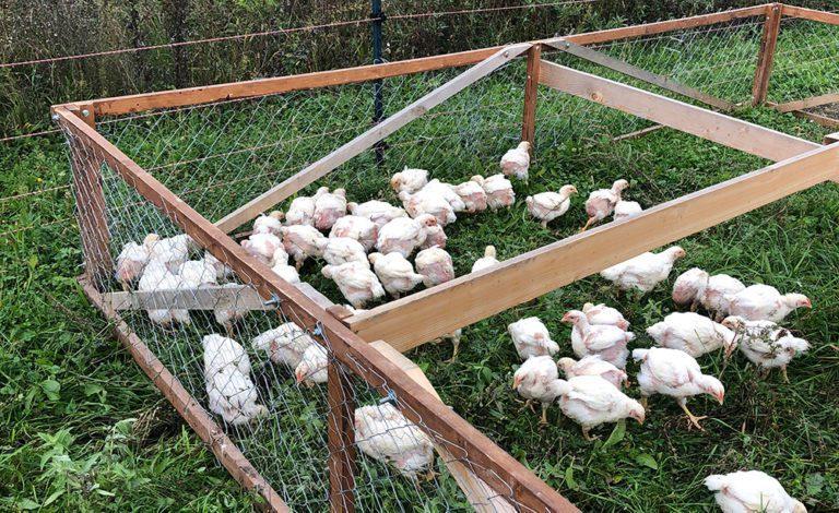 Remény Farm Rólunk írták blogposzt